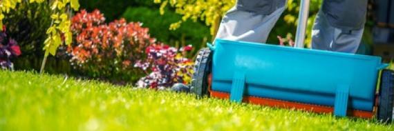nawożenie trawnika