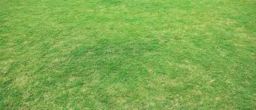 Żółty trawnik